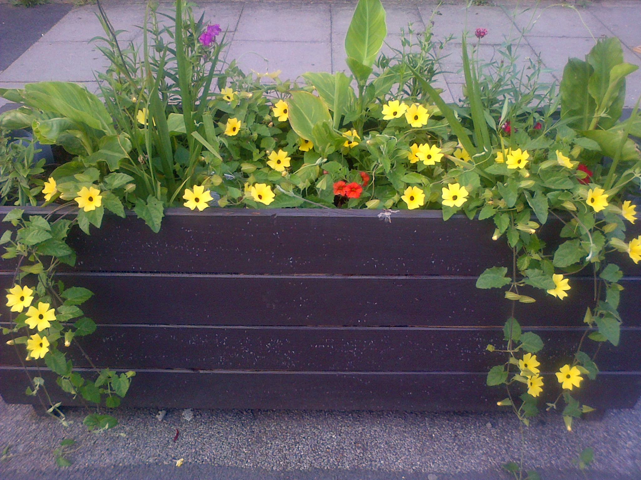Springbank Road - Scout Planters