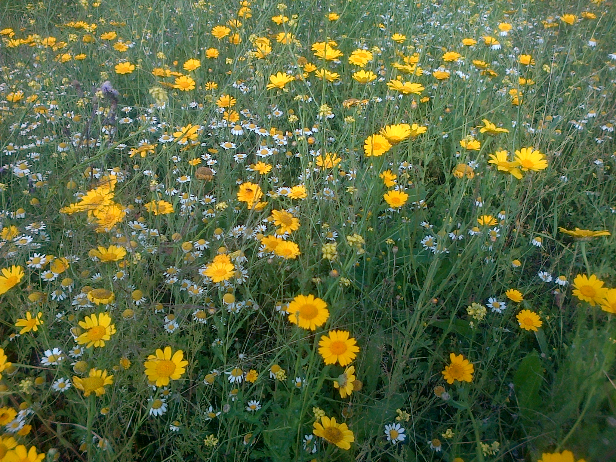 St Mungos Centre- Wildflower Meadow